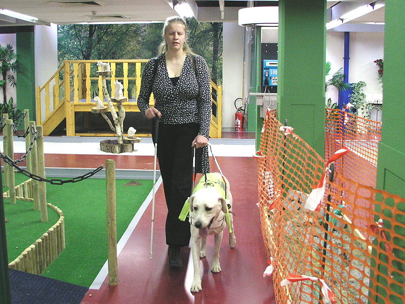How do you train a guide dog